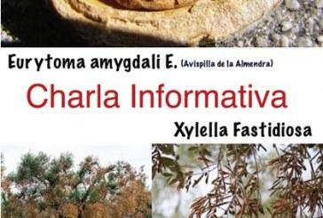 Avispilla de l'ametlla, Xylella fastidiosa