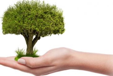 Dia Institucional provincial de l'arbre 2019, en Biar.